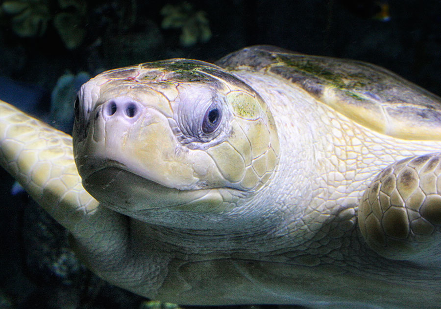 face of sea turtle