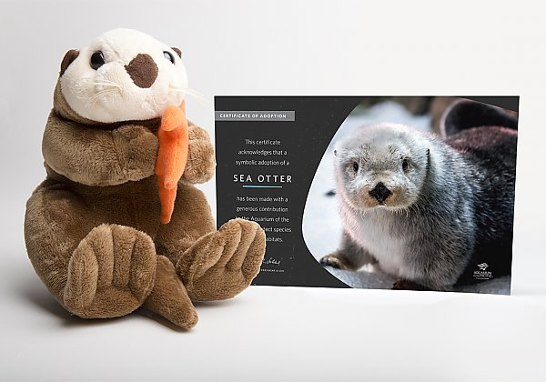 50 otter adopt package