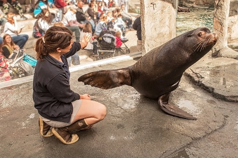 Trainer and sea lion