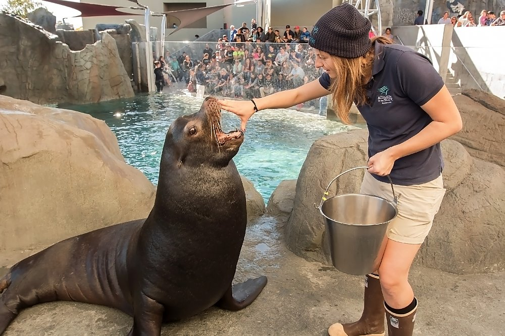 Trainer with hand on sea lion