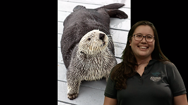 Ask a Scientist: Marine Mammals