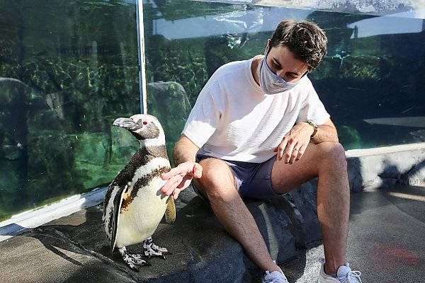 Masked man gently pets penguin chest